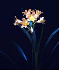 Blue Stem Flower