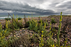 Playa de Grau Vell (Palo) Tags: sea beach valencia clouds mar grau playa paisaje nubes tormenta platja vell nubols sagunt sagunto puzol puol