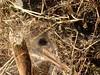 Funnel web spider (steven_and_haley_bach) Tags: bug insect spider byzantine animalia arthropoda mystras arachnida sixthday mistras greecevacation byzantineruins