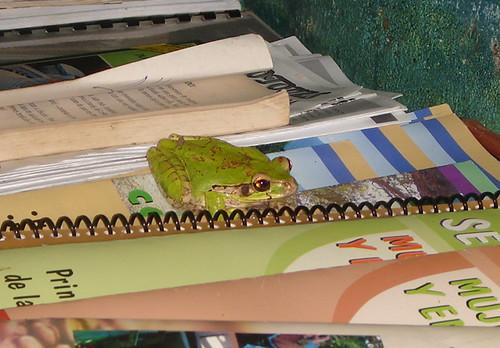 Entre libros - Isla de Chira