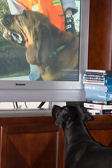 Buffy watching TV