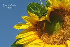 Luz do Sol (Lauren Cunha) Tags: naturesfinest salveanatureza
