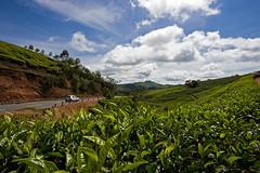 Munnar Day Two (Kris Kumar) Tags: trip vacation india tourism garden tea may kerala tourist plantation 2008 southindia westernghats munnar idukki canon40d keralatrip2008 idukkidistrict
