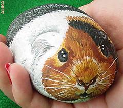 Hand painted rock. Guinea pig (Alika-Rikki) Tags: pet pets cute rock stone painting guinea pig guineapig rocks hand stones painted gift handful rockpainting paintedrock