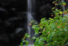 DSC_0044 (Kathryn Poole) Tags: park creek state ridley