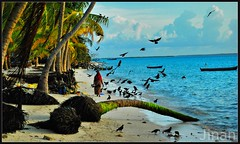 Time to Crow (Prof EuLOGist) Tags: old sea tree bird water lady clouds island evening boat sand women coconut erosion soil crow maldives haa atoll jinan hussain hanimaadhoo dhaalu