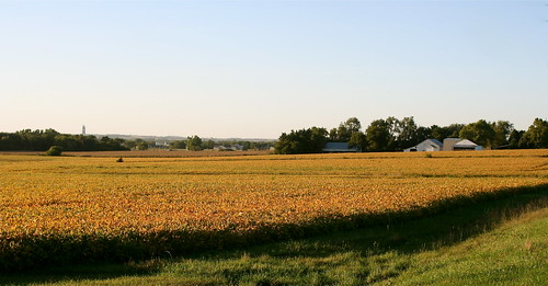 Soybeans Turning Golden