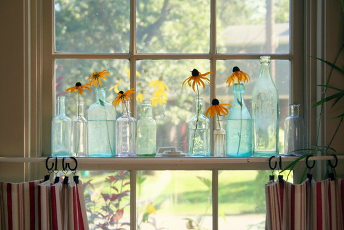 brown eyed susans in a row