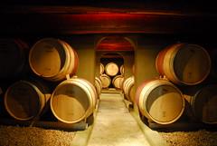 Wine Cellar, Cafayate