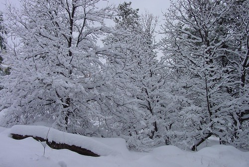 Snow 16Dec08 02