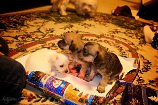 Puppy Presents!