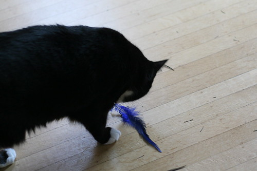 sergei with new fur & feather toy