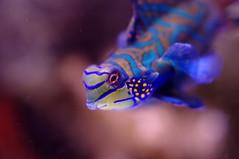 IMGP6044 (hin_man) Tags: closeup aquarium bay monterey pentax cosina 4 picasa 55mm hoya f12 k20d