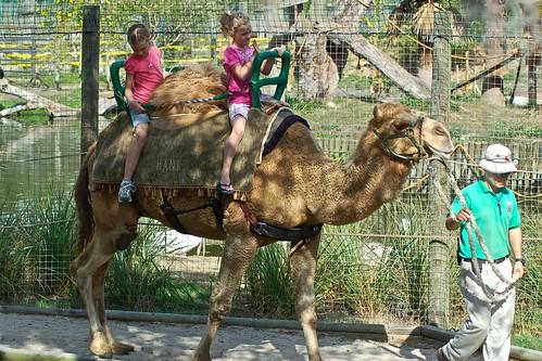 Livi and Ava riding camel