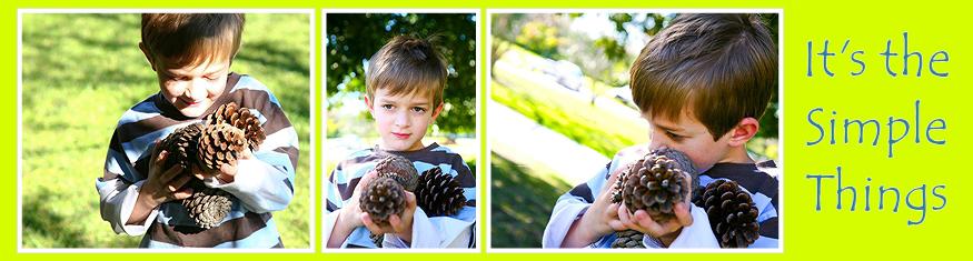 pinecones-000001