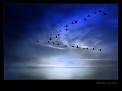 Tiempo de grullas (ATrenado) Tags: blue sunset espaa water azul spain agua aves explore siluetas canon30d grullas a3b