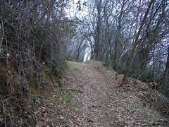 calambrina (La Madonnetta, Veneto, Italy) Photo