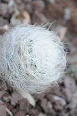 botanico 141 (blum1) Tags: cactus botanico ortobotanico