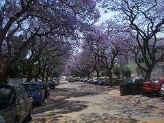 Pretoria (alerumi) Tags: africa south jacaranda pretoria