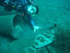 HUGE Flounder