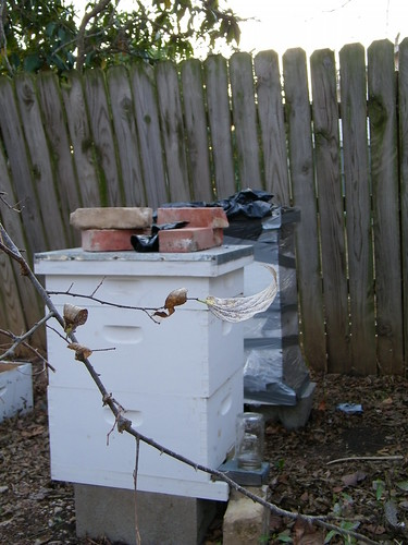 Our two hives in the yard