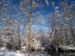 Winter Garden Paradise (greekstifado - Yanni) Tags: trees winter sky snow color philadelphia nature leaves creek forest woods seasons dreamy rainbowbridge pennypackpark multimegashot