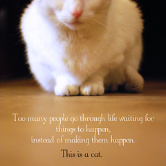 """Waiting"" () Tags: life people white cat for this is waiting many go things them through too instead making happen"
