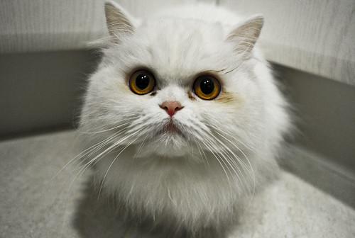 [フリー画像] 動物, 哺乳類, 猫・ネコ, 201106271100