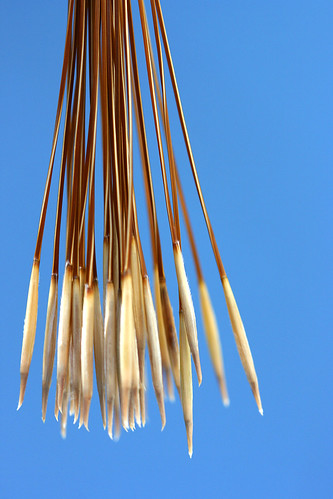 stipa arrows