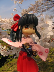 Sakura on sakura (sensoubijutsu) Tags: japan kyoto sakura hanami bunnysuit haruhi