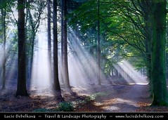 Netherlands - Magic Light in Lage Vuursche Forest ( Lucie Debelkova / www.luciedebelkova.com) Tags: world trip travel trees light shadow vacation panorama holiday tree green tourism nature netherlands beautiful forest wonderful landscape outdoors dawn licht fantastic europe track mood tour view place dusk path awesome sightseeing scenic atmosphere paisaje visit location tourist paisagem beaut journey vista destination sight traveling sunrays visiting paysage exploration incredible landschaft touring breathtaking paesaggio evropa holandsko magiclight dramaticlight platinumphoto nizozemi luciedebelkova lagevuurscheforest wwwluciedebelkovacom lptracks