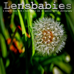 Lensbabies - Dictionary of Image (dandelion clock) (s0ulsurfing) Tags: light sunlight blur macro green art nature closeup illustration lensbaby photoshop square typography design graphicdesign artwork weeds focus dof graphic natural bright artistic bokeh creative manipulation ps dandelion seeds creation greens definition font layers 2008 gratitude lensbabies dictionary squared dandelions bracts pissenlit taraxacum dandelionclock dentdelion lensbaby2 dandelionseeds meacamas lionstooth s0ulsurfing piscialletto pissabeds thedictionaryofimage ruderals