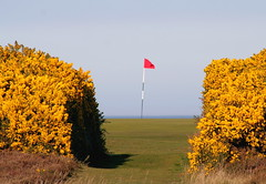 16th Green, Royal Dornoch Golf Course