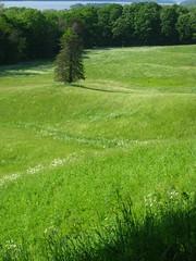 Lone Tree (historygradguy (jobhunting)) Tags: trees ny newyork water grass river landscape upstate hills hudsonriver hydepark hudson lonetree dutchesscounty vanderbiltmansion vanderbiltestates