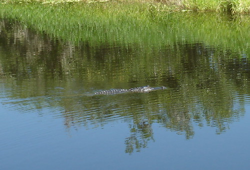 hey there mr. alligator