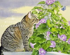 """""""Henrietta and the Morning Glories"""" AER74 by A E Ruffing Tabby Cat"""