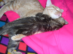 DSCN2057 (delilah84) Tags: cats animals chat felini animaux gatti animali gatte chattes