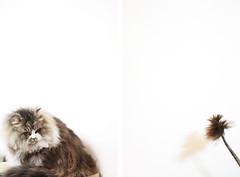 (kang-gg) Tags: cat charlie 貓 查理