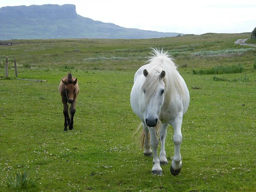 Horses by monkeypuzzle, on Flickr