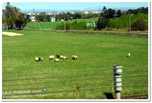 Hokkaido_1068