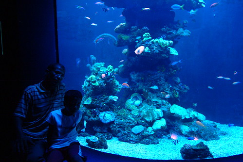 Saharauis al aquarium