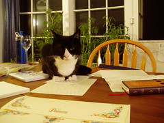 Soda supervises a letter (Missive Maven) Tags: writing cat post mail wine journal pad kitty snail stamp letter soda postal write wineglass 2008 stationery rubberstamp snailmail stamppad florentia