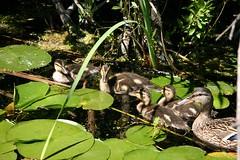 010 016 (bkraai2003) Tags: heron butterfly squirrel arboretum goose