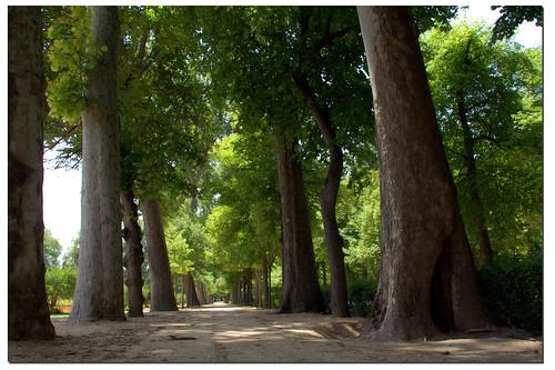 jardines del Principe. Aranjuez