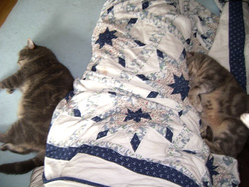 morning snuggling with the boys