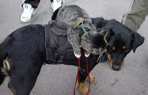Mouse Cat Dog In Telluride by ☆   Tabrel.