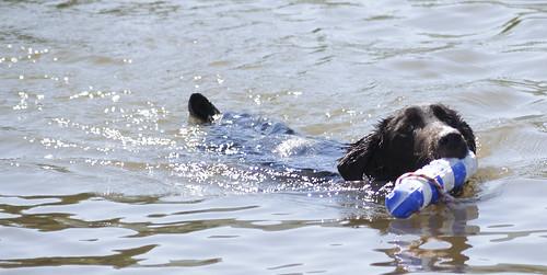 Chase Swim