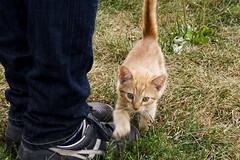 omg cute kitten