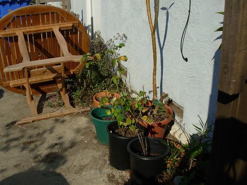 garden shots aug 08 040
