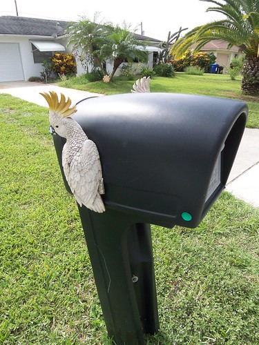 Parrots on a Mailbox